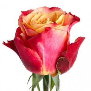 Розы сорта 3D оптом из Эквадора