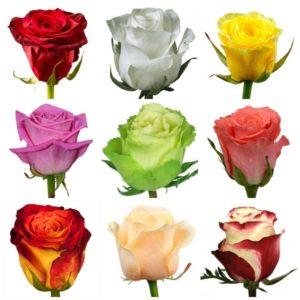Розы оптом от 0,35$ в Москве. Самая низкая цена на розы в России!