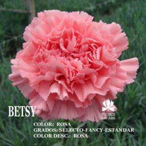 Гвоздика Betsy оптом