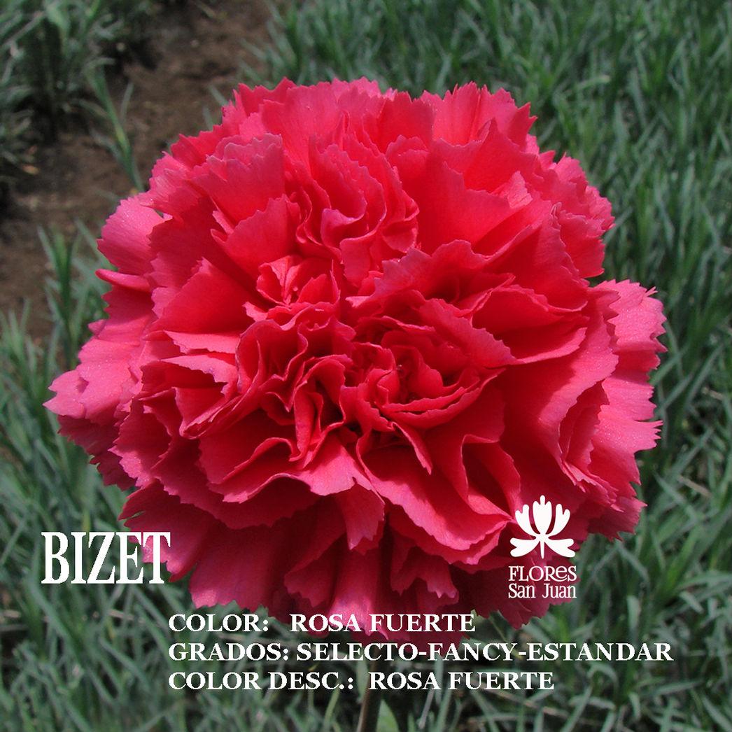Гвоздика Bizet оптом
