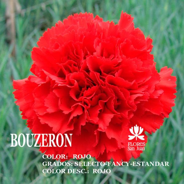 Гвоздика bouzeron оптом