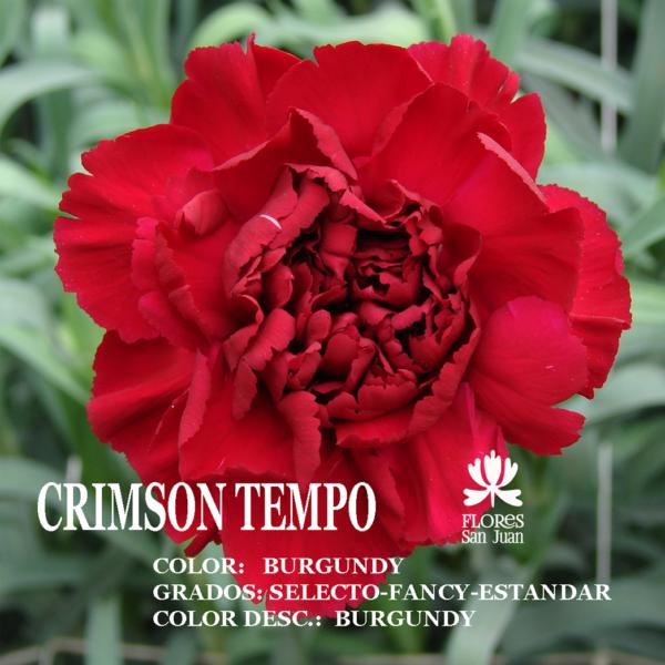 Гвоздика Crimson Tempo оптом