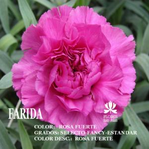 Гвоздика Farida оптом