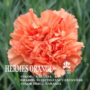 Гвоздика Hermes Orange оптом