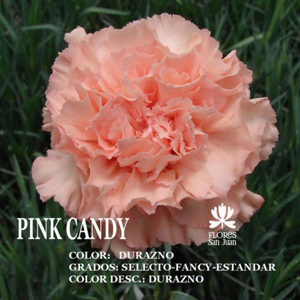 Гвоздика Pink Candy оптом