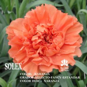 Гвоздика Solex оптом