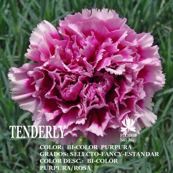 Гвоздика Tenderly оптом