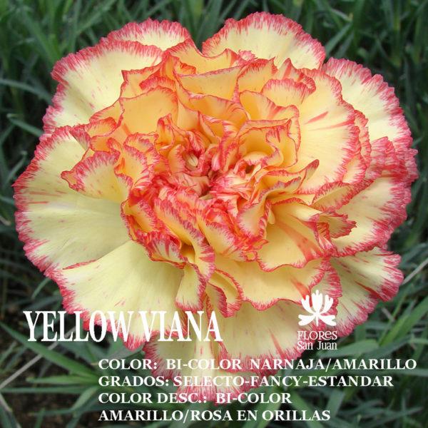 Гвоздика yellow Viana оптом