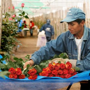 Эквадор. Продажи цветов упали на 70 %
