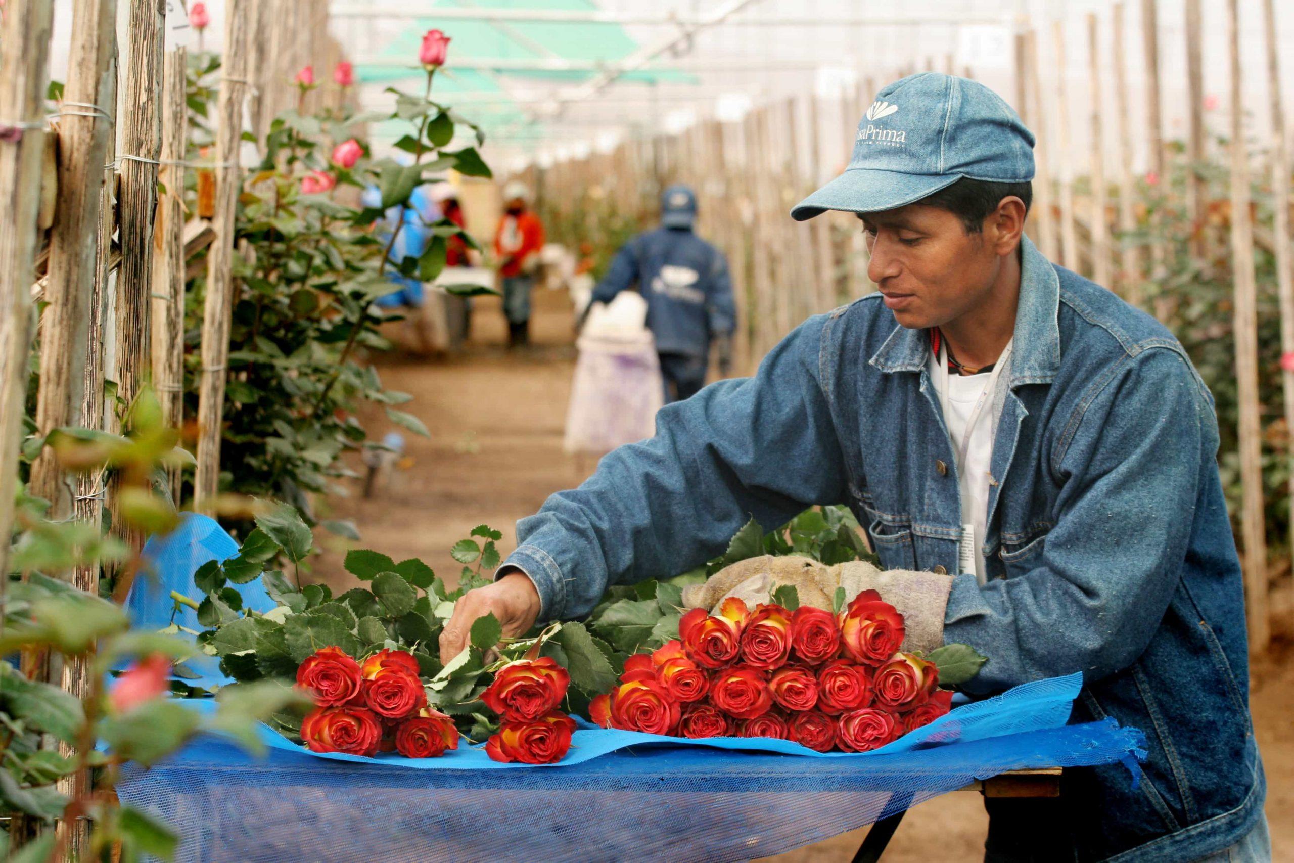 производителей и экспортеров цветов Эквадора