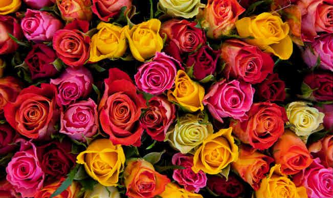 Кенийская роза оптом